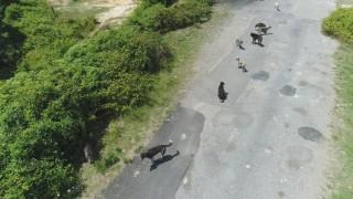 (Özel) İstanbul'da binlerce başıboş köpeğin adeta istila ettiği köy havadan görüntülendi