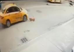 (Özel) Pendik'te köpeğe çarpan taksici kaçtı